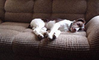 Zieke hond? Hondenverzekering vergelijken!